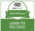 Lobster Pot Dive Center Tripadvisor